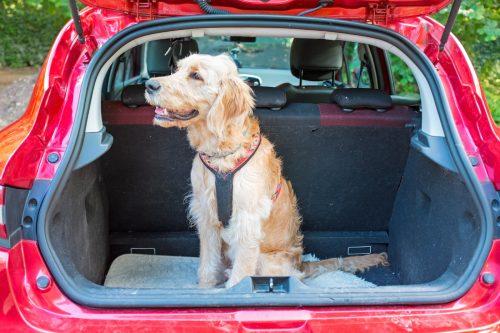 Viaggiare con il cane o con il gatto