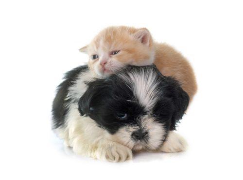 coccole cani e gatti